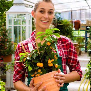 Продавщица горшечных растений