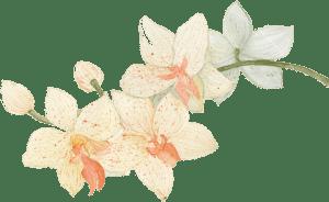 Цветок в пастельных тонах в стиле Прованс